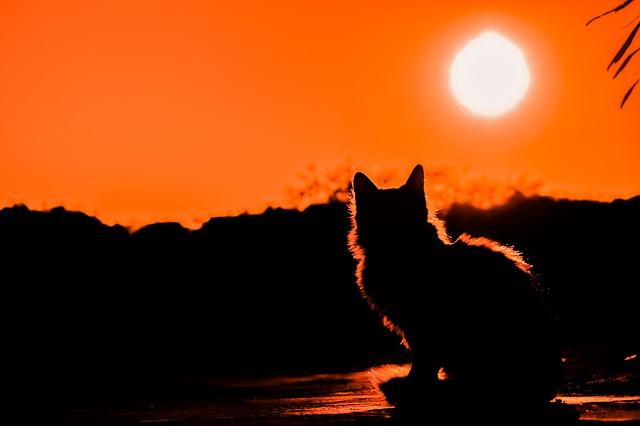 sunset-3008779_640