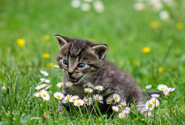 kitty-2948404_640